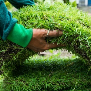 Professional Sod Installation Services in Talbot County, MD